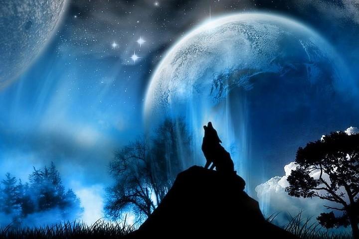 Почему волки воют на луну? Легенда и реальные причины