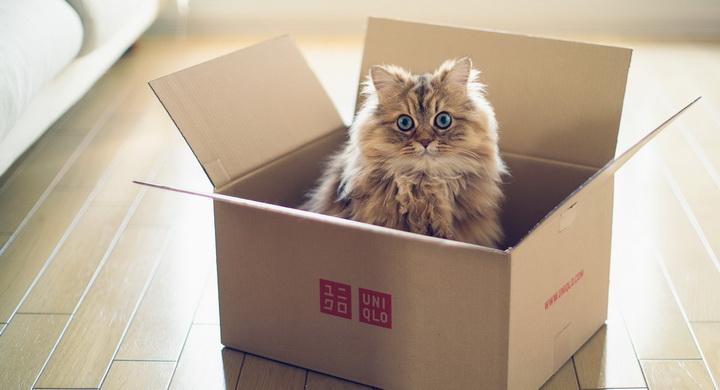 Почему кошки любят коробки и обожают пакеты