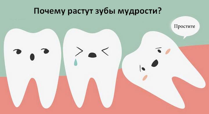 Растет зуб мудрости – что делать, быстрая помощь