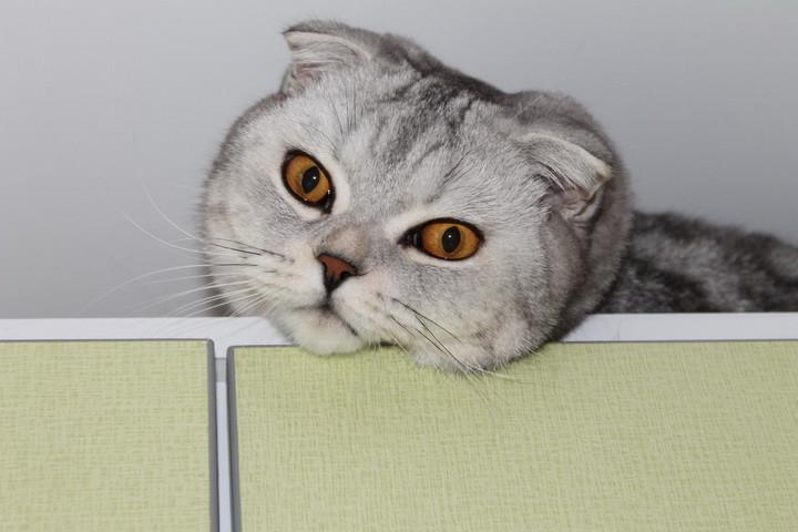 кот перестал мурлыкать