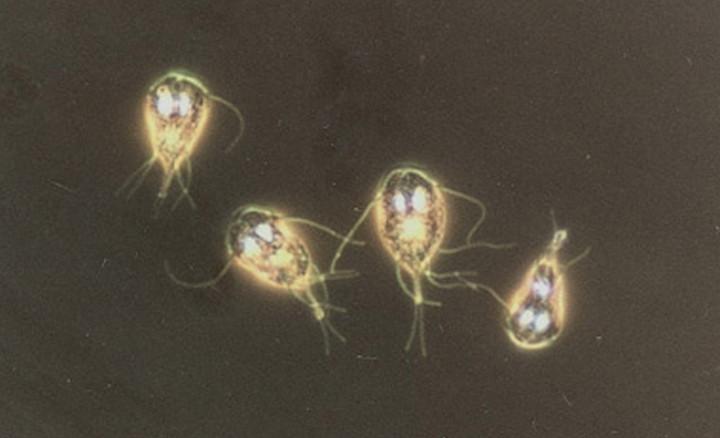 Лечения и профилактики от паразитов