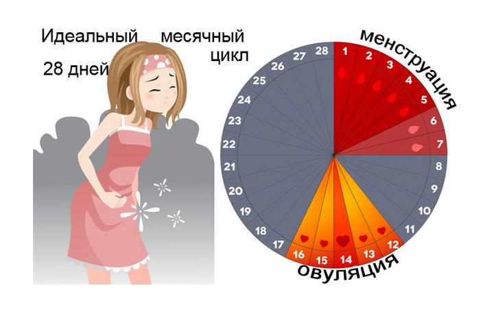 идеальный менструальный цикл