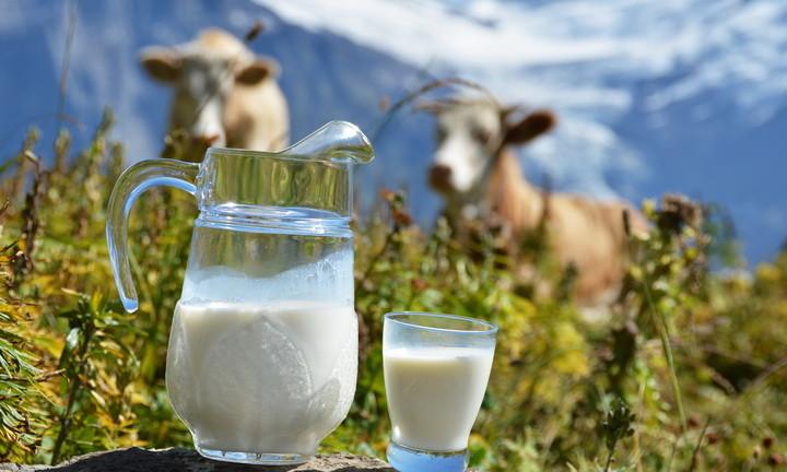 Почему скисает молоко Как проходит процесс скисания  молоко в стакане