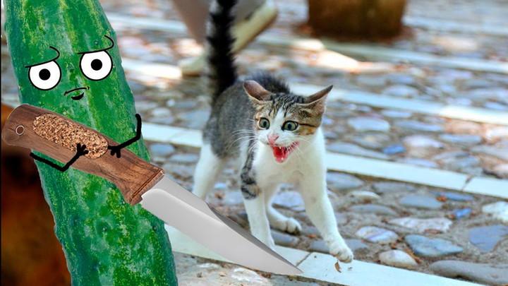 Почему коты боятся огурцы видео