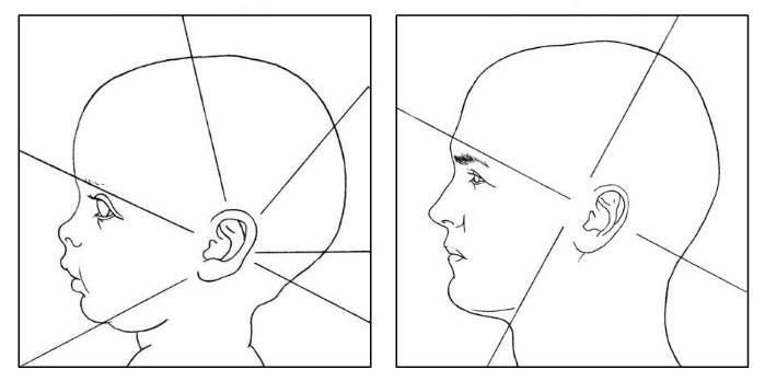 пропорции головы ребенка и взрослого