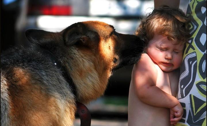 ребенок боится собаки