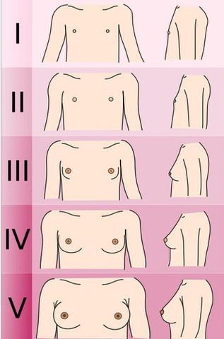 Стадии формирования женской груди