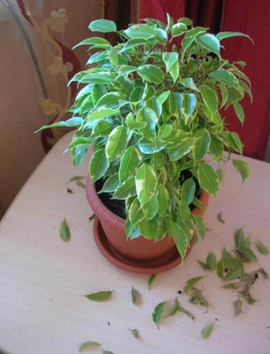 Выращивание клубники в южных регионах