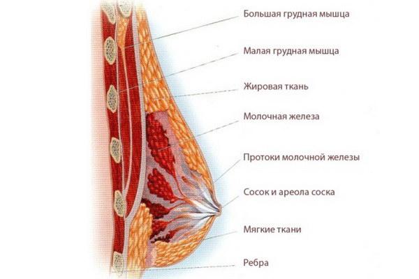Признаки беременности грудь болит