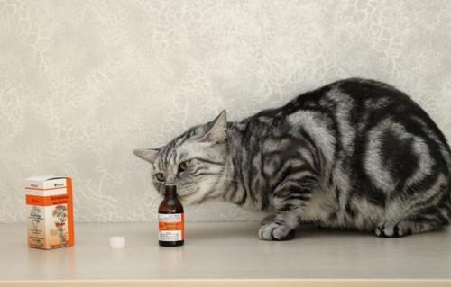 Почему коты любят валерьянку? Вредна ли она им?