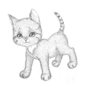 Рисуем кошку поэтапно 5