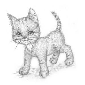 Рисуем кошку поэтапно 6