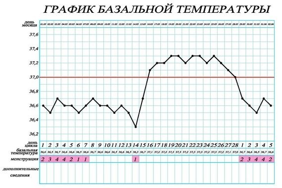 Определить беременность по базальной температуре