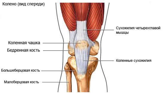 Сустав колено лечить ядра окостенеия тазобедренный сустав сроки